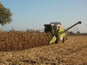 corn-837815_1280